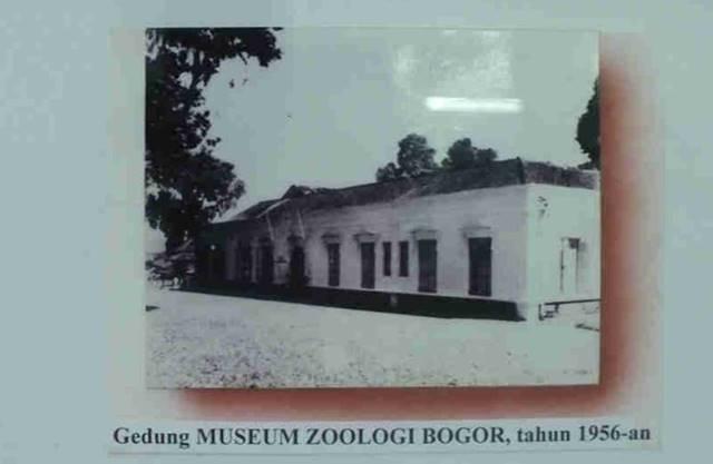 Foto Museum Zoologi Zaman Dulu A