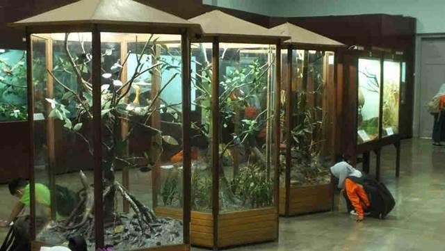 anak-anaks sedang mengamati spesiemen di muzeum zoologi bogor