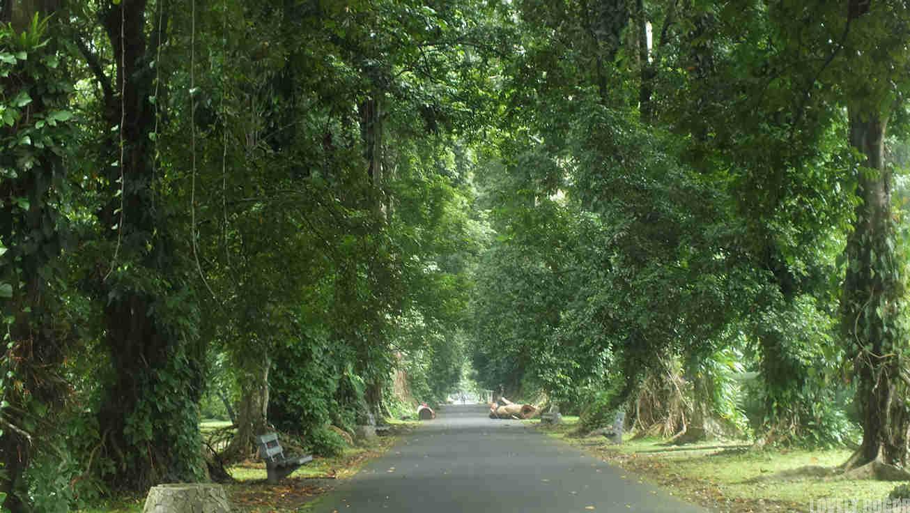 Sejarah Kebun Raya Bogor – Kerjasama Antar Bangsa ?