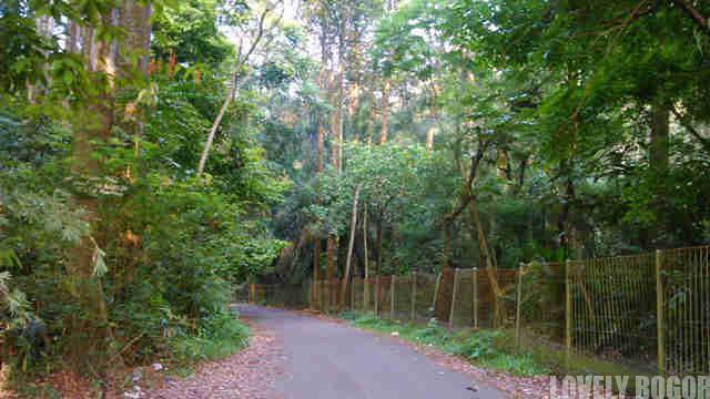 Hutan Penelitian Dramaga – Hutannya CIFOR