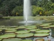Taman Astrid Kebun Raya Bogor