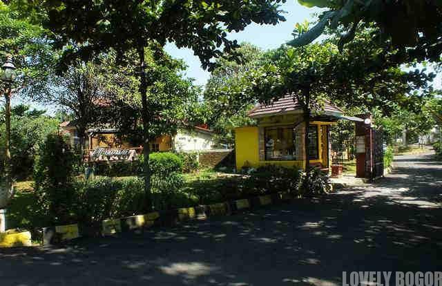Pohon Ketapang Di Bukit Cimanggu City