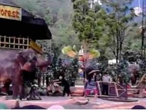 Atraksi Gajah Taman Safari Bogor