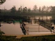 Bogor Bird Lake