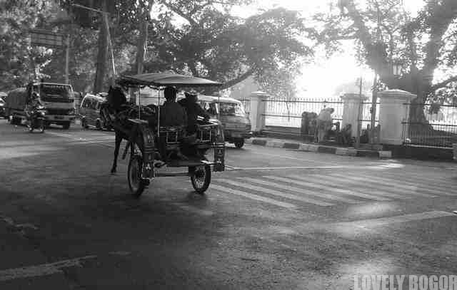 Horse cart (Delman) in Bogor