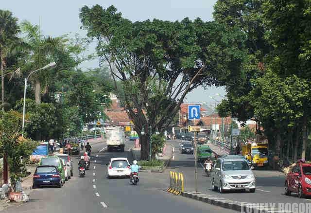 Jalan Veteran – Masih Ada Pohon Kenarinya