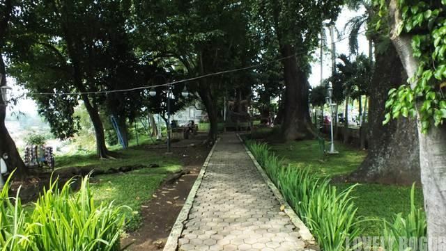 Pohon Raksasa Tua Di Taman Peranginan Bogor