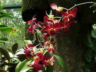 The Orchids 08