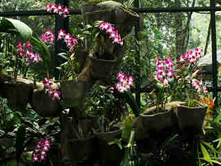 The Orchids 09