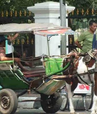 Delman Di Bogor