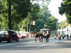 A Horse Cart on street in Bogor