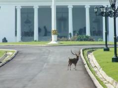 Menanti Pak Jokowi