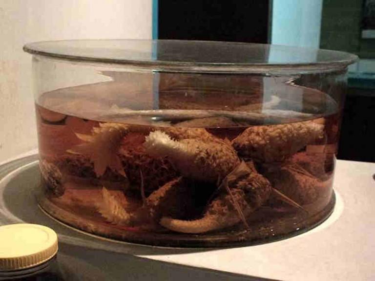 Museum Etnobotani – Tak Kenal Maka Tak Sayang