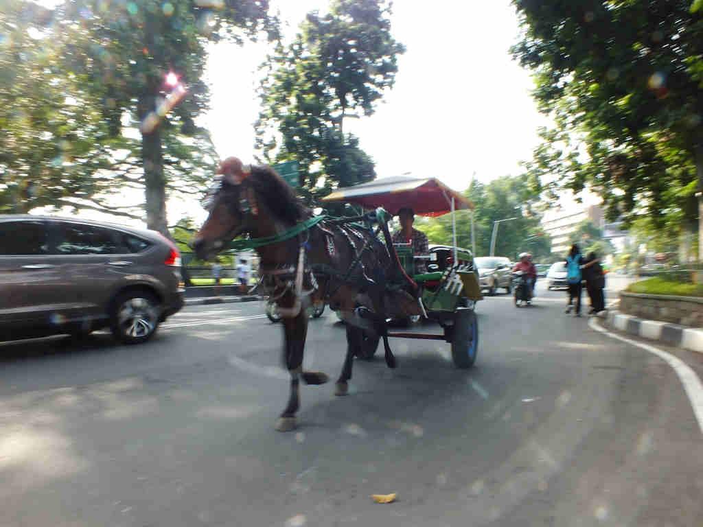 Delman in Bogor