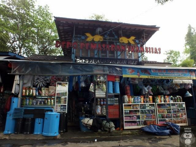 Depo Pemasaran Ikan Hias Bogor