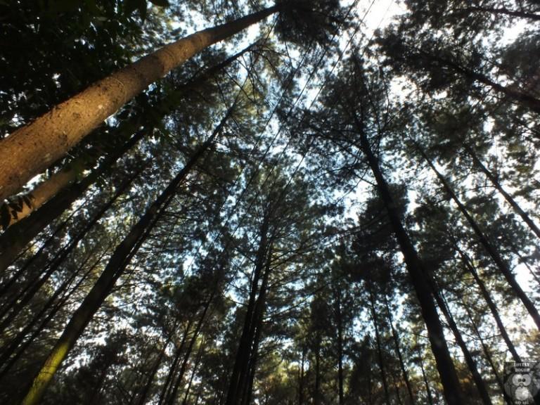 Gunung Pancar : Nikmatnya Kembali Ke Alam