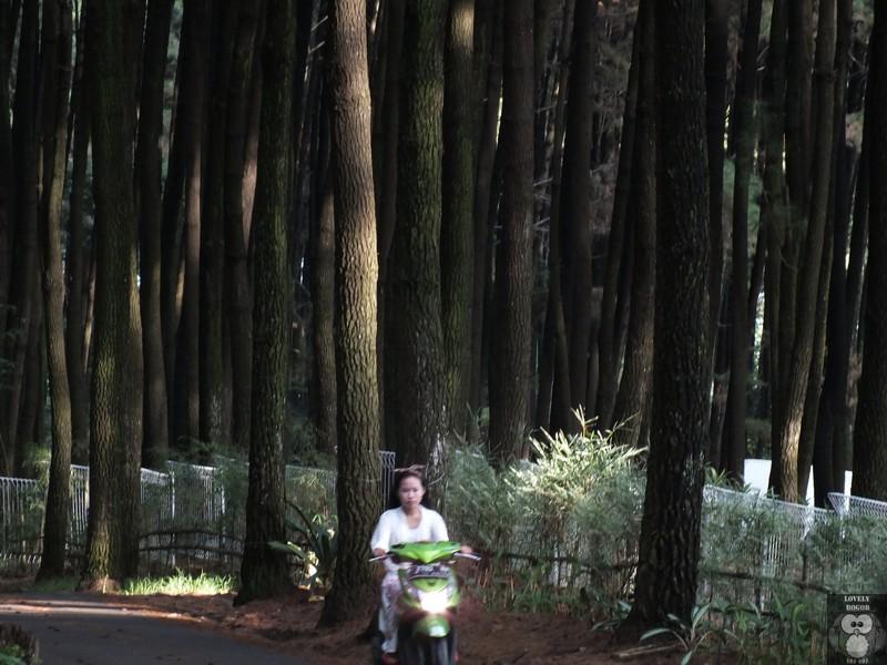 Taman Wisata Alam Gunung Pancar