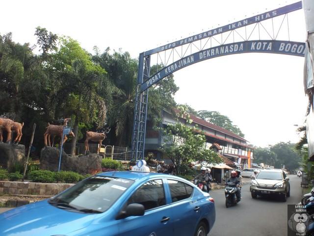 Jalan Bina Marga : Kuliner, Ikan Hias, Dan Tanaman Hias