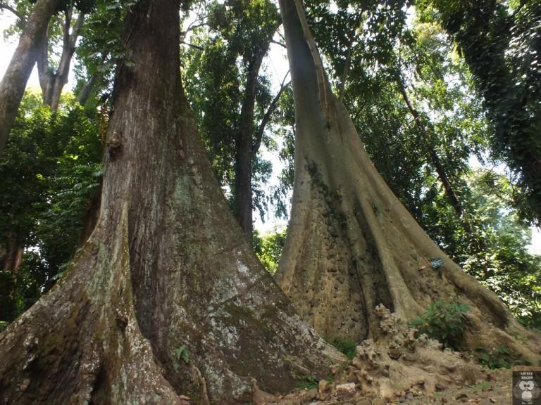 Pohon Jodoh : Pasangan Berlainan Bangsa