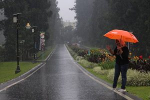 Bermain di Kebun Raya Saat Hujan Itu Menyenangkan