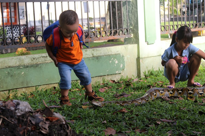 anak kecil bermain dengan ular
