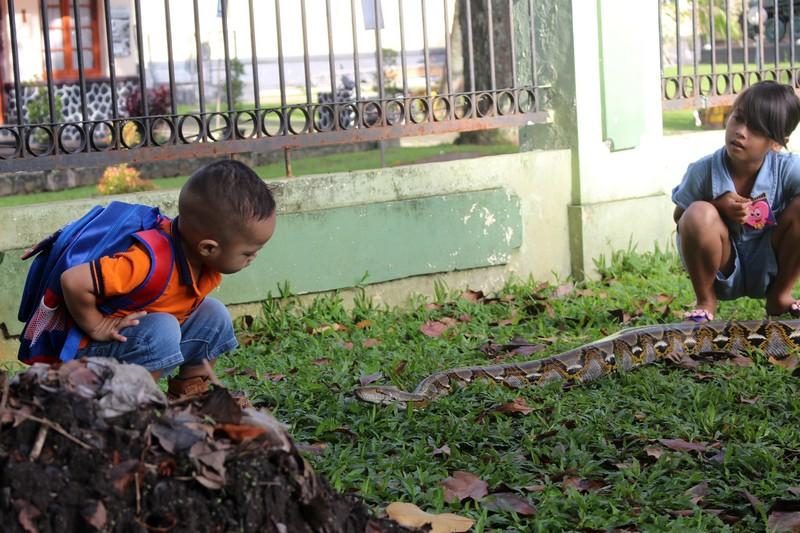 bermain dengan ular di Car Free Day Bogor
