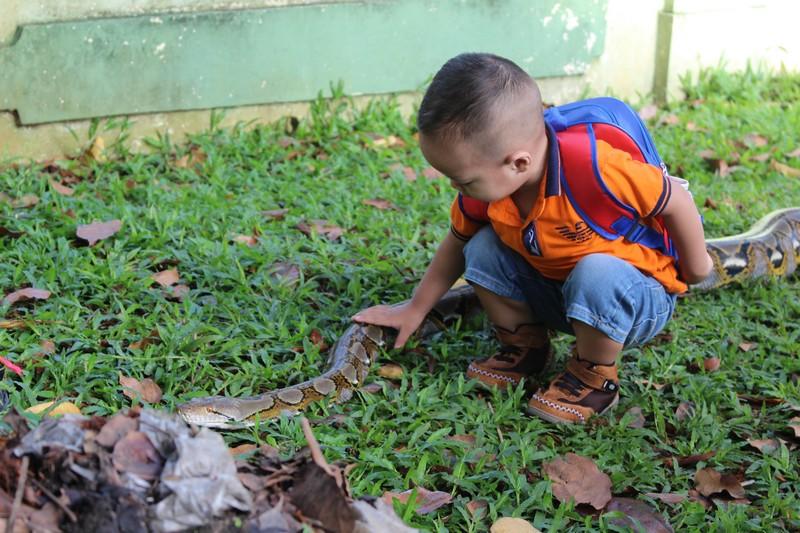 anak kecil bermain ular di car free day 04