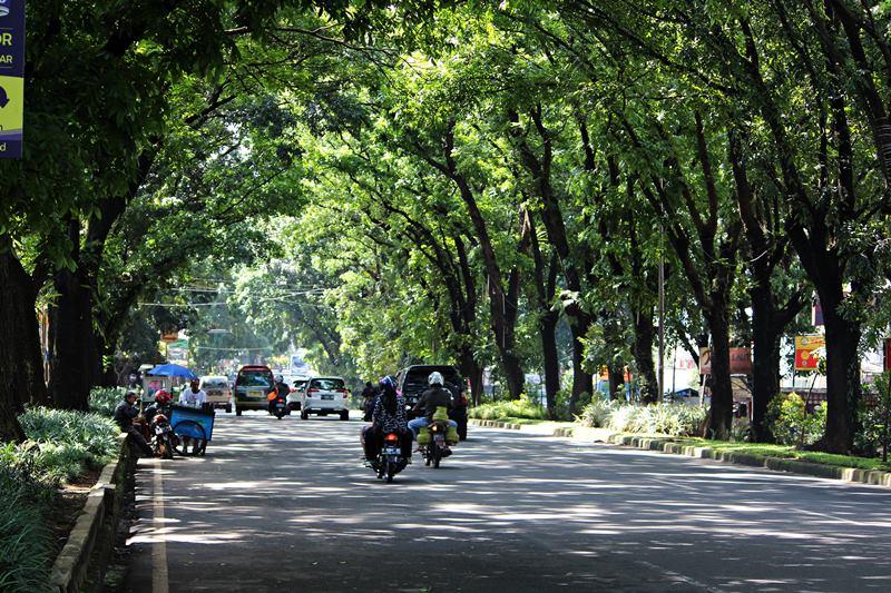 Canopy Tree on Pajajaran Street