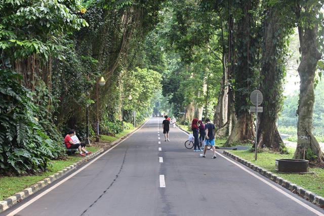 Tempat Lari Pagi dan olahraga Terbaik di Bogor , Kebun Raya 2