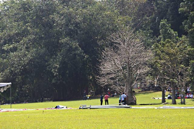 Pohon tanpa daun di Kebun Raya Bogor