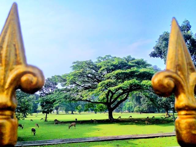Padang rumput yang indah di depan Istana Bogor a1