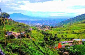 Pemandangan Indah di Puncak Bogor