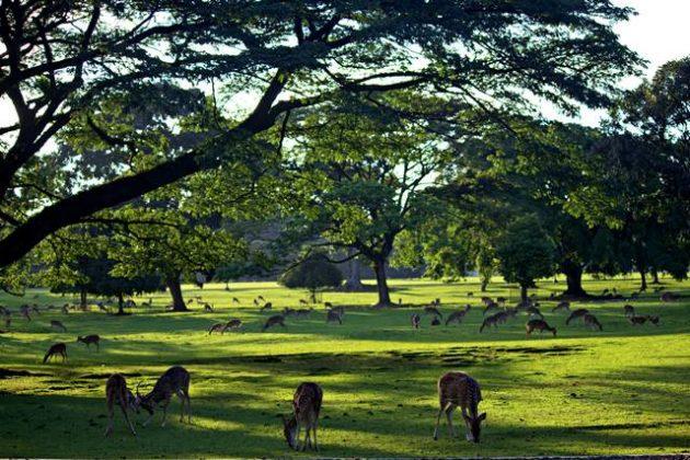 rusa totol sedang makan di bawah pohon a