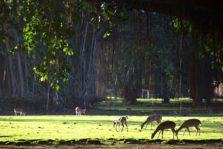 Menikmati Pemandangan Rusa Sedang Makan di Halaman Istana Bogor