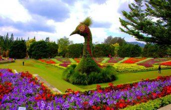 Taman Bunga Nusantara - Indahnya Warna Warni Bunga di Taman Tetangga A
