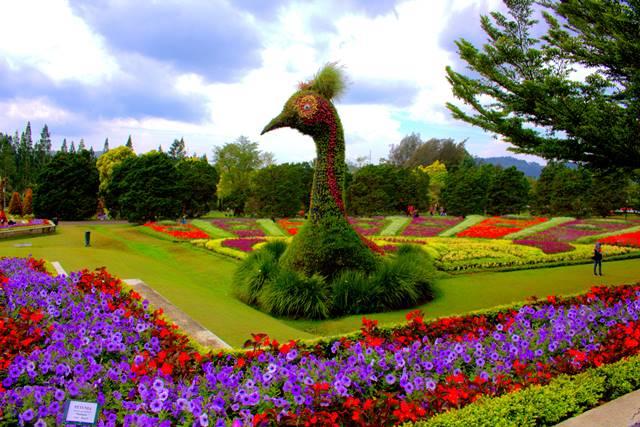 Taman Bunga Nusantara : Indahnya Warna-Warni Bunga di Taman Tetangga!