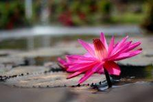 Aplikasi JAWARA : Anti Nyasar di Kebun Raya Bogor