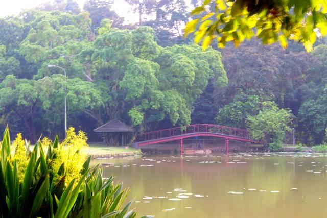 [JANGAN DITIRU!] Cara Pengunjung Tak Bertanggungjawab Menyembunyikan Sampah di Kebun Raya Bogor