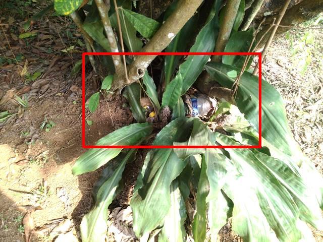 Jangan Ditiru Cara Pengunjung Tak Bertanggungjawab Menyembunyikan Sampah di Kebun Raya Bogor