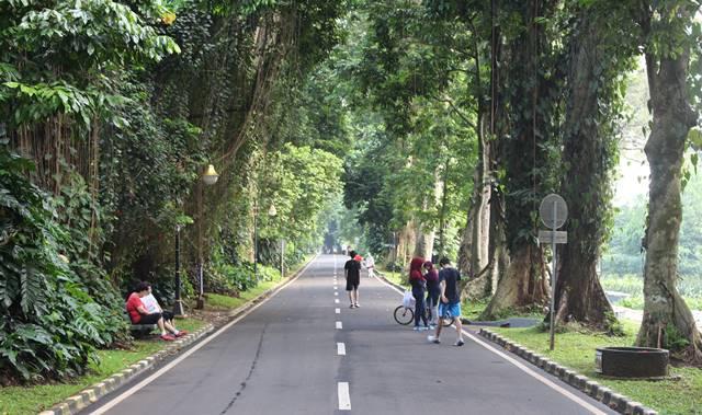 Keuntungan masuk Kebun Raya Bogor lebih awal daripada jam operasional resmi