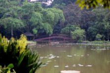 3 Aturan Paling Sering Dilanggar di Kebun Raya Bogor