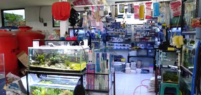 Bursa Ikan Hias Laladon - Anda Butuh Akuarium C