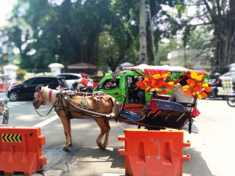 Kalau di Bogor, Delman Hias Ada Bukan Cuma Saat Karnaval Saja