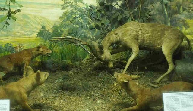 Museum Zoologi Bogor Dalam Foto