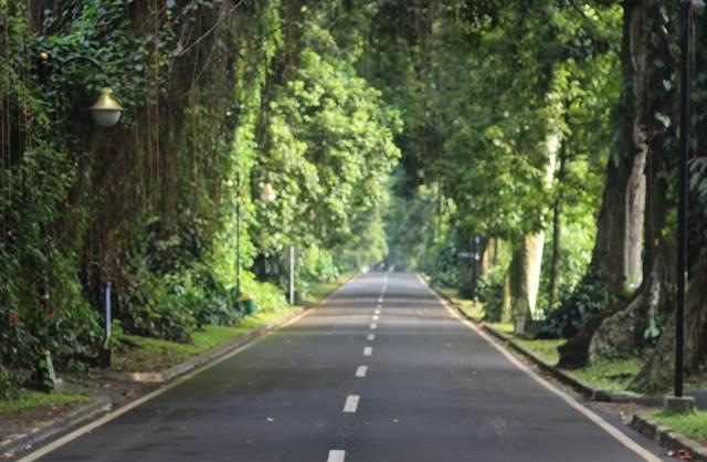 Pohon Menghasilkan Oksigen - Tahukah Anda?