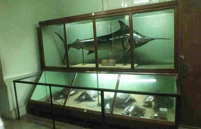 Museum Zoologi Bogor Dalam Foto - Spesimen Ikan dan HewanLaut