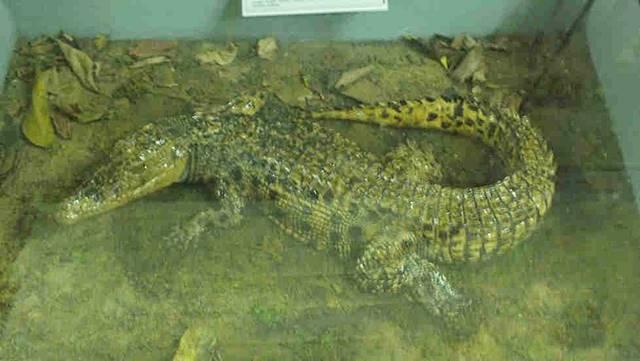 Museum Zoologi Bogor Dalam Foto - Spesimen Reptil