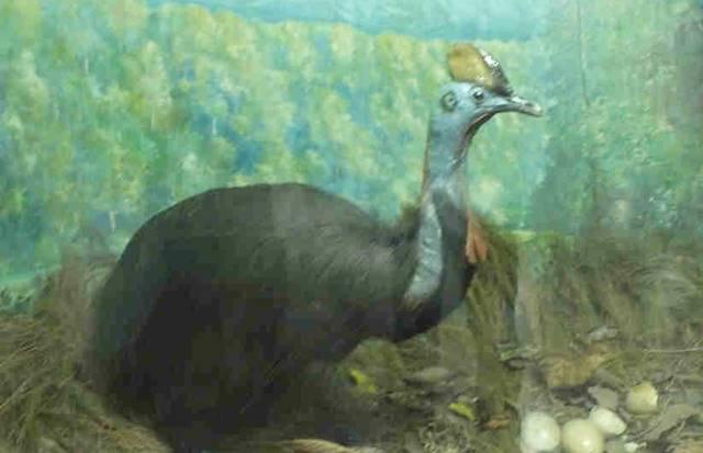 Museum Zoologi Bogor Dalam Foto - Spesimen Burung