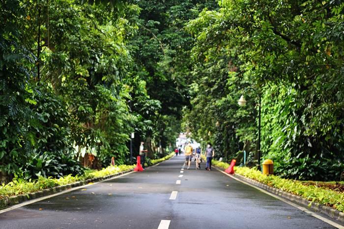 Tips Membawa Kamera DSLR/Mirrorless Ke Kebun Raya Bogor